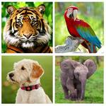Animal Sounds - Animals for Kids, Learn Animals APK icon
