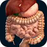Internal Organs in 3D (Anatomy) APK icon