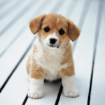 Cute Little Puppies Wallpapers APK icon