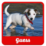 Guess the puppy APK