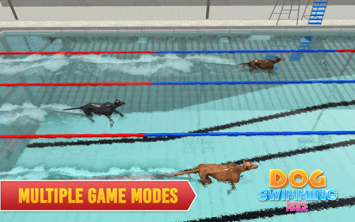 Swimming Pool Dog Racing – Wild Animal Simulator APK : Download v1