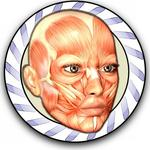 Speed Anatomy Quiz Free APK