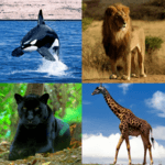 Guess The Animal APK