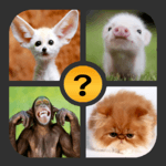 4 Pictures 1 Word APK