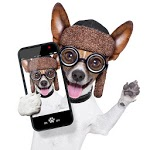 Look Here - Pet Camera APK