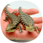 How to Take Care of Reptiles & Amphibians APK icon