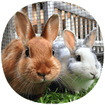 How to Take Care of a Pet Rabbit APK icon