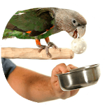 How to Train Your Parrot APK icon