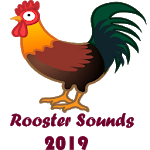 Rooster Sounds 2019 APK icon