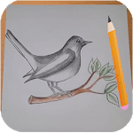 How to Draw Birds APK icon
