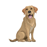 Brave Puppy Lite: Dog Training Tool APK icon