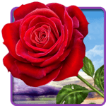 Rose. Magic Touch Flowers APK