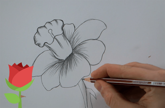 Easy Realistic Flower Drawing Drawing Art Ideas
